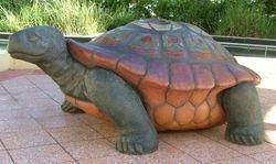 Tortoise Oasis Mall Australia