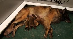 momma and pups