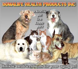 poster of various pets for product