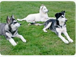 Bowulf, Omen & Astra 4 months