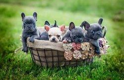 The Basket Full