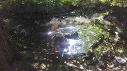 Having a dip at Ickworth Park
