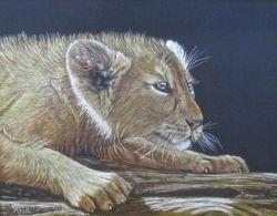 Stalking Lion Cub