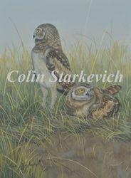 """Burrowing Owl Fledglings (12 by 9"""" acrylic on panel)"""
