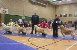 Dog CC, Reserve Dog CC, Best Puppy Dog and Best Veteran Dog