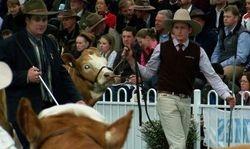 Tennysonvale heifer