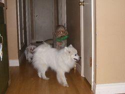 Coco, Kona and Rocky