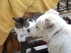 1 Dec 09 - Misty with Jim the cat