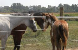 Miley and Reba checking out filly Penny