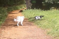 Joining Diesel on a run at the forest