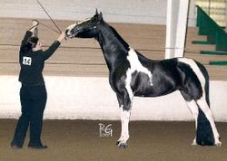 Katie and Krysta Halter (National Show Horse)