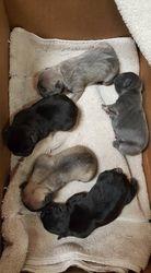 Cap'n Stitch & Lucy Loo Loo pups