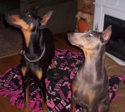 winnie and sophie