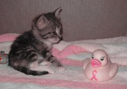 Duckie as a kitten