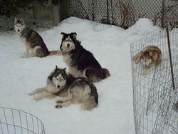 Mieshka, Juno, Bear FKA Silver & Ember