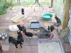 Jasper, Poppy, Grace, Scrap, Harold, Trixie, Pixie & Scruff