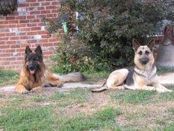 Lukas & Dixie