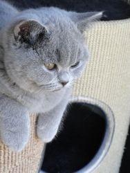 Pippa 18 maart 2012