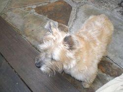 Tucker the dog, age 11