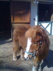 Lil' Pony