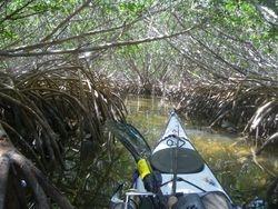 Mangroves in Florida Keys