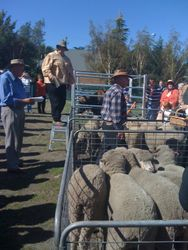 Sheep sales re-enactment