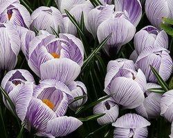 "Purple Spring 20"" x 25"""