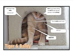 Tiger and Bailey 2