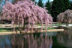 Kemp Mill Pond