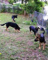 Running the back yard