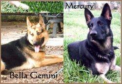 Bella and Mercury