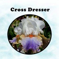 Cross Dresser