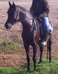 BBlack Karabella 2007