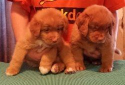 Two sweet boys 6.5 weeks
