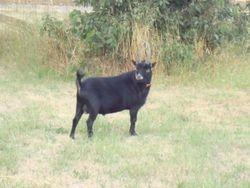 very handsome buck