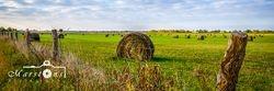 Hay Field Color Long