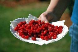 Plate of raspberries