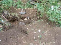 Bottles found in dumps & privy's