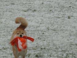 mijn eerste sneeuw