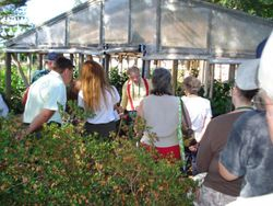 Barry and Susan Schleuter open up their greenhouses for the AHS members.
