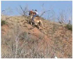 Haflinger Hill Climb