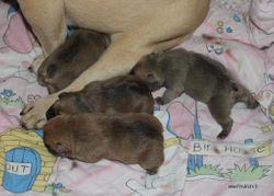 2 boys & 2 girls, all fawn