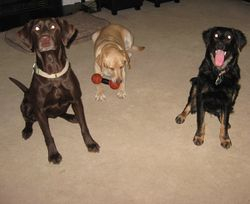 Hershey, Annie, Jasper
