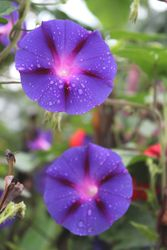 Name that flower?