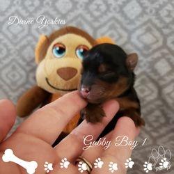 Gabby Boy 1