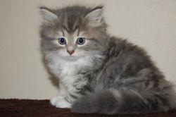 Anastasia, 7 uker og 730 gr.