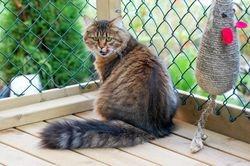 Gorislava ute i kattegården