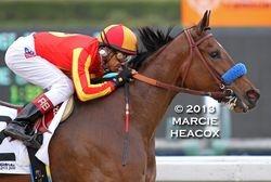 Fiftyshadesofhay wins the Santa Ysabel Stakes