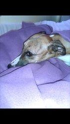 Ginger having a sleep in.