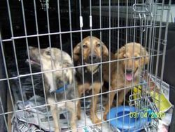 Before:  Faith, Hunter and Bluebell